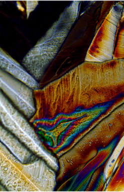 Microscopic Photography 2 by Sutton