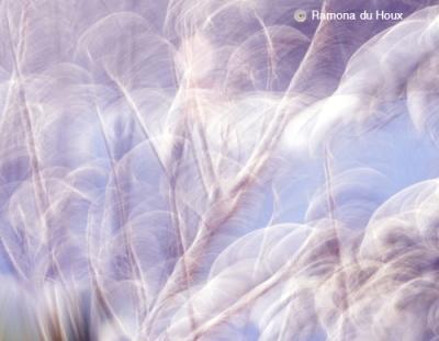 Snow Dance by du Houx