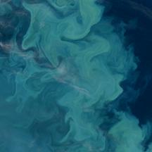 Barents Bloom for Science paper web
